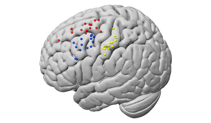 New Information On The Brain Areas Linked To Tactile Sense And