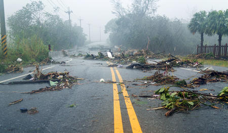 A road after a storm with fallen trees in the ground