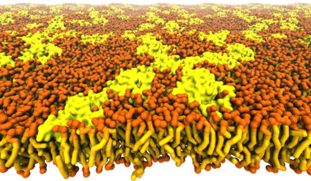 Protein crowding in lipid bilayers.