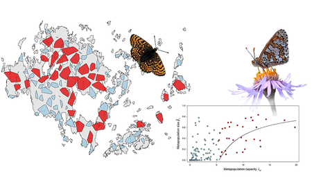 Melitaea cinxia metapopulation network in Åland Islands
