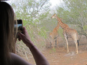 Tourist taking a photo of a giraffe on her phone