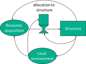 Interaction between structure and function in tree modelling.
