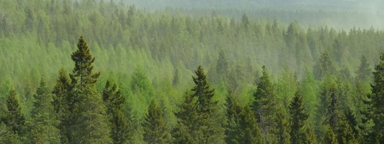 Boreal forests interacting with the atmosphere