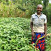 Farmer growing soybean for the first time