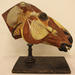 Anatomical model representing a horse's head.
