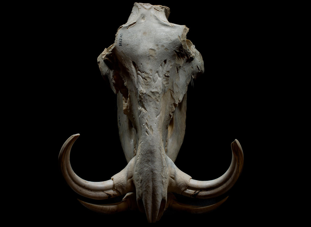 Natural History Museum's skulls and skeletons help