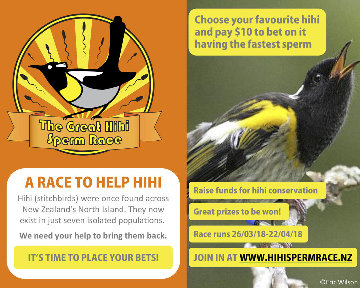 Great Hihi Sperm Race promo postcard