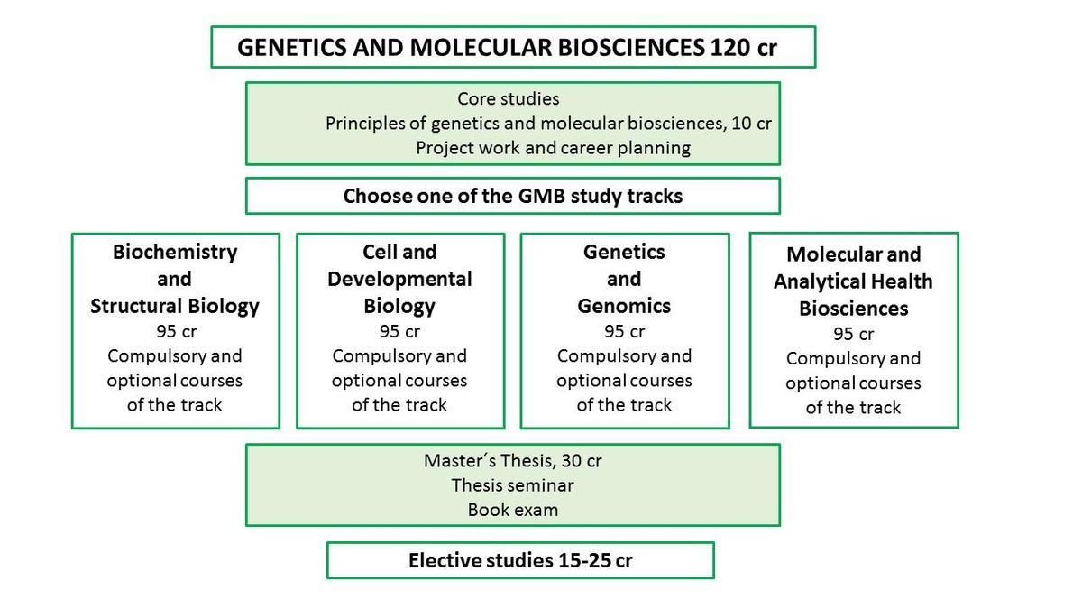 GMB Degree Structure image