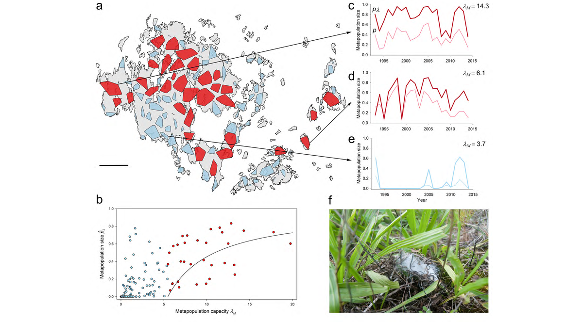 The study system and the metapopulation capacity of the habitat patch networks.