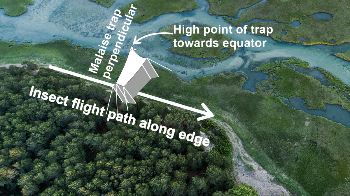 Positioning of Malaise traps relative to insect flight paths. Project Lifeplan, University of Helsinki.