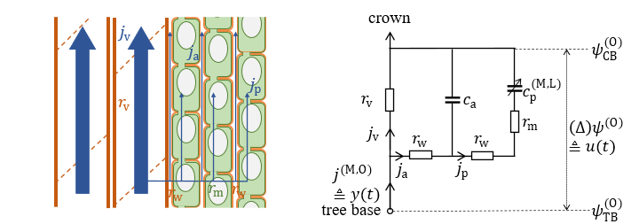 Example of mechanistic modelling.