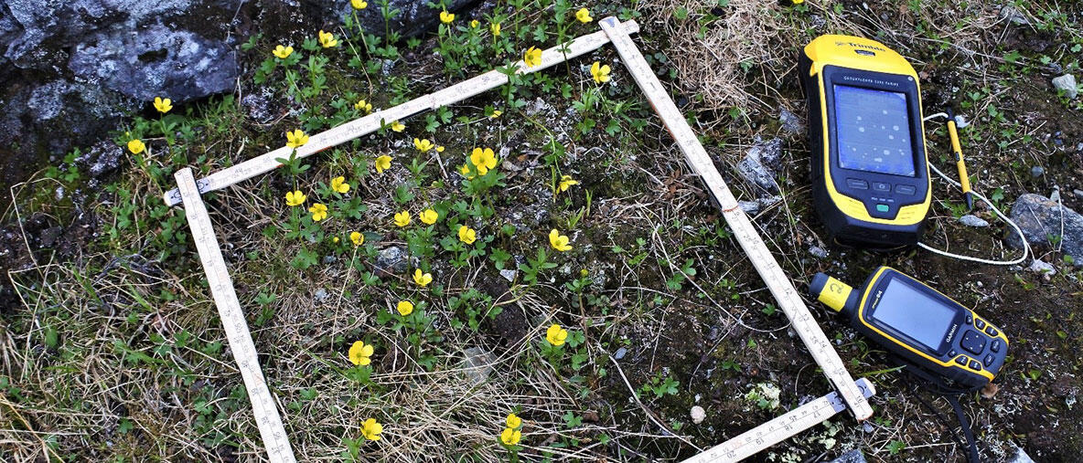 Environmental conditions are changing rapidly in the tundra ecosystems. Photo: Julia Kemppinen