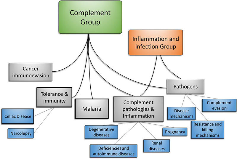 Complement group research topics