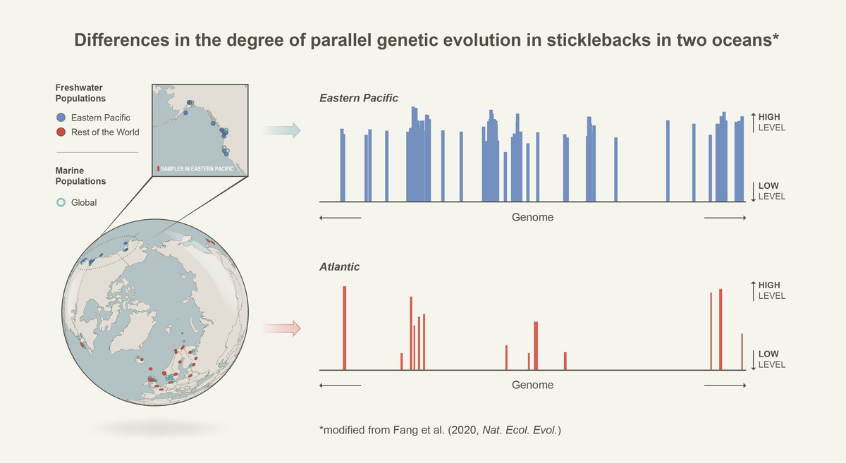 Differences in the degree of parallel genetic evolution in sticklebacks in two oceans