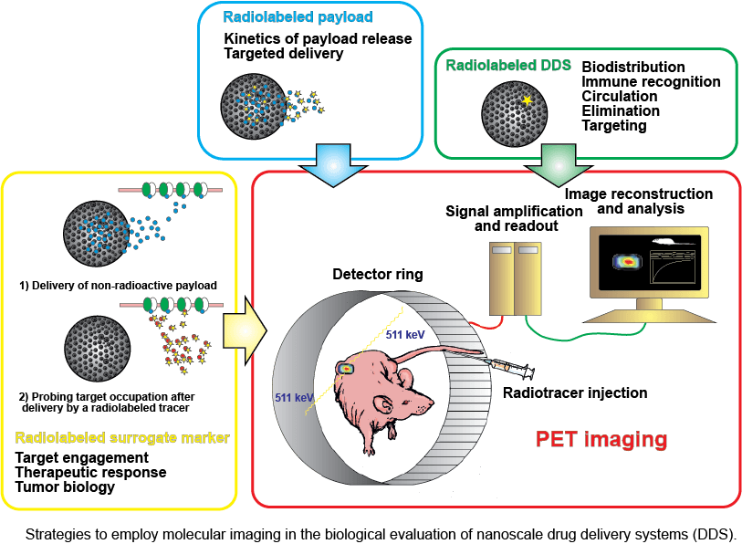 Strategies for the use of molecular imaging for the evaluation of nanoscale drug delivery systems