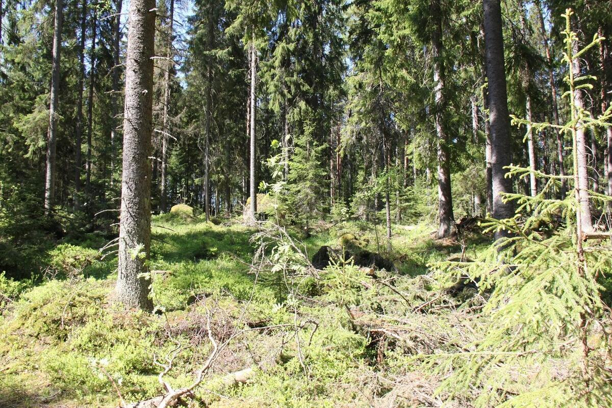 Untypical forests in forest modelling.