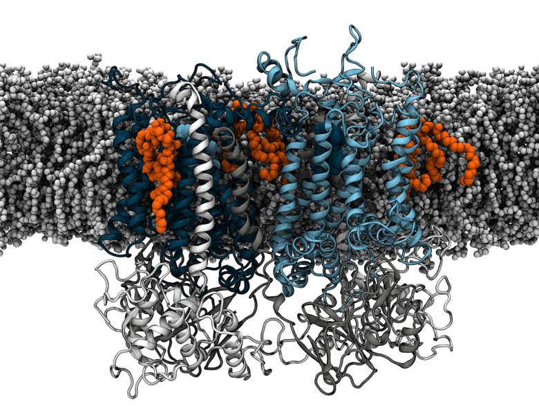 Cardiolipin molecules in the cytochrome bc1.
