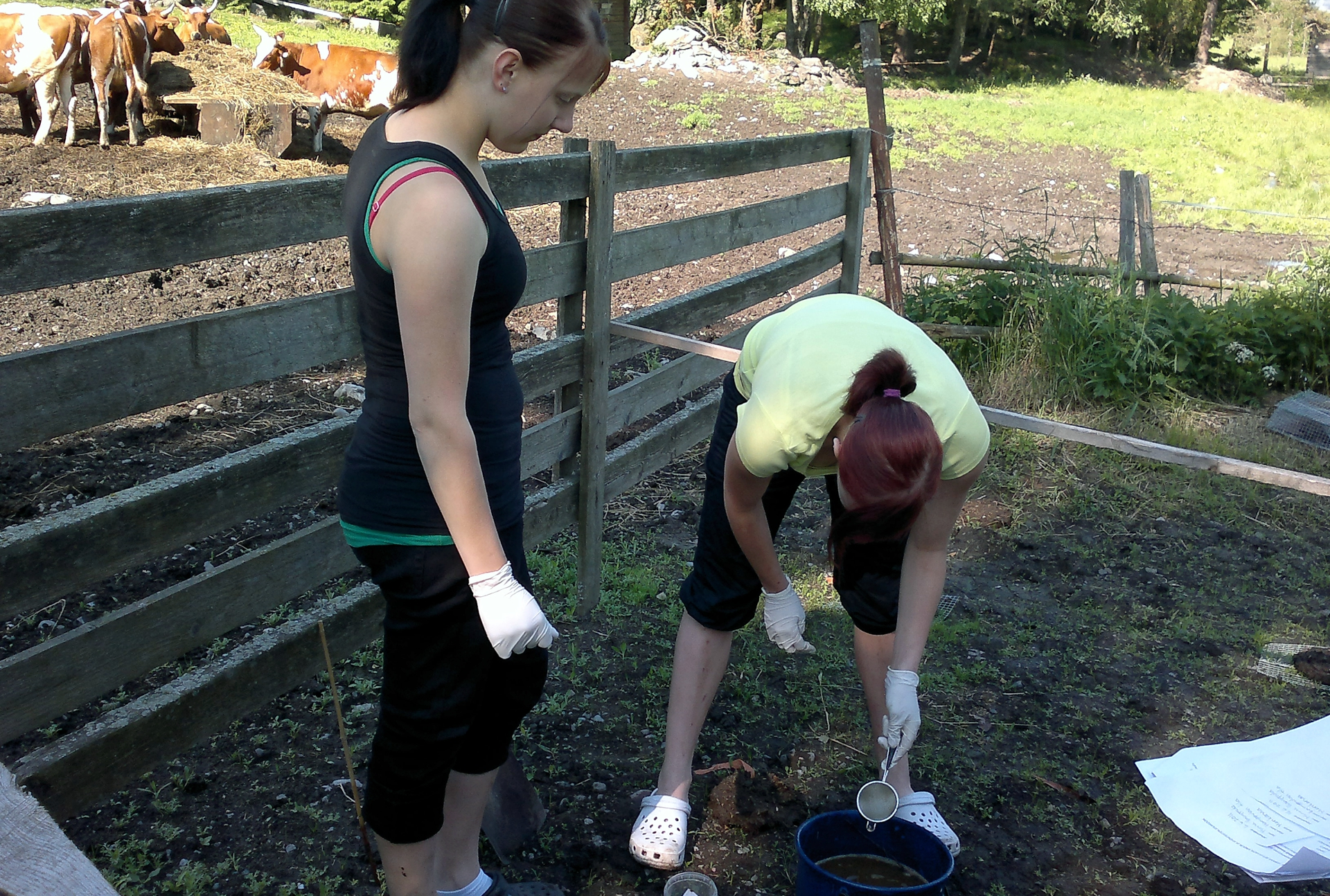 4H kids looking for dung beetles in buckets. By Anna-Kaisa Valaja
