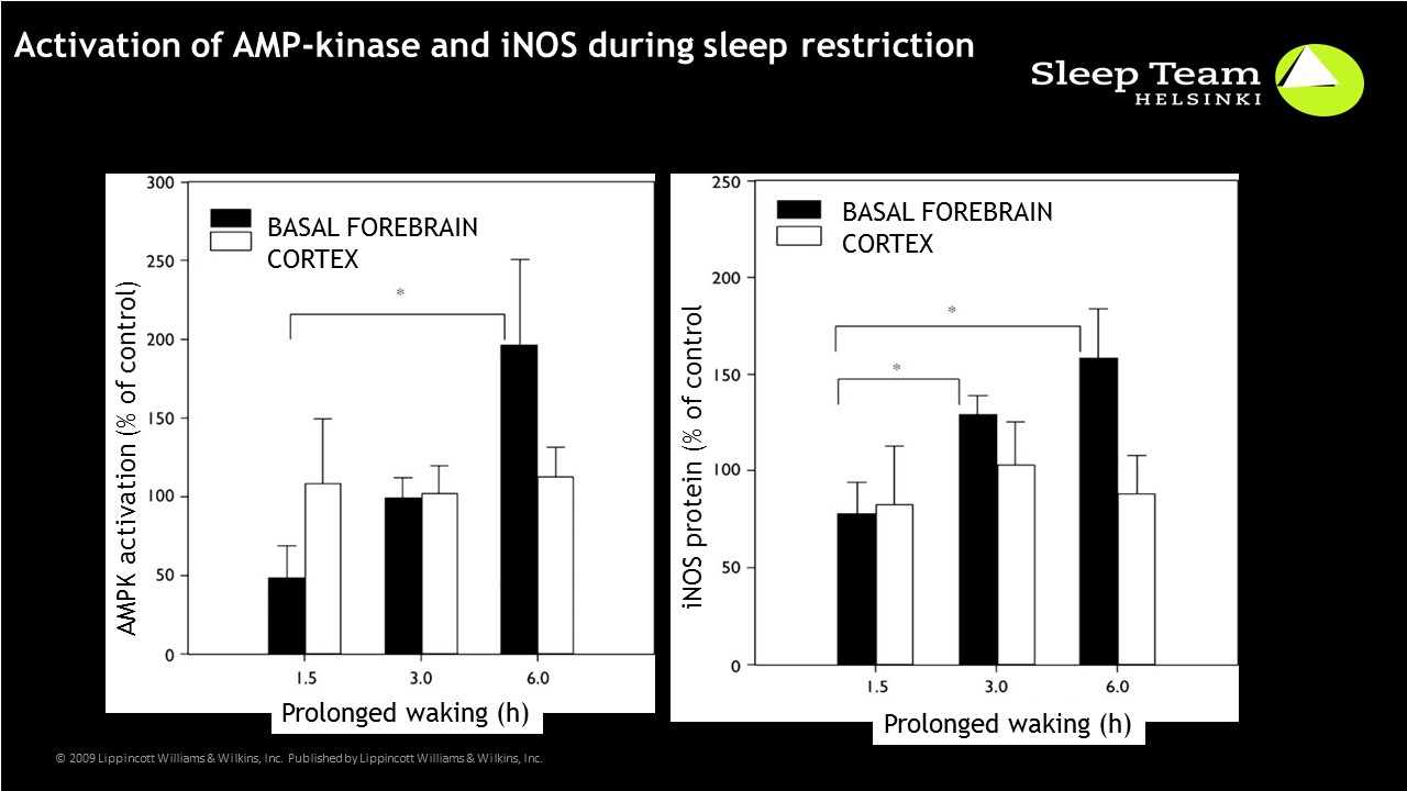 Effect of sleep restriction on AMPKkinase and iNOS