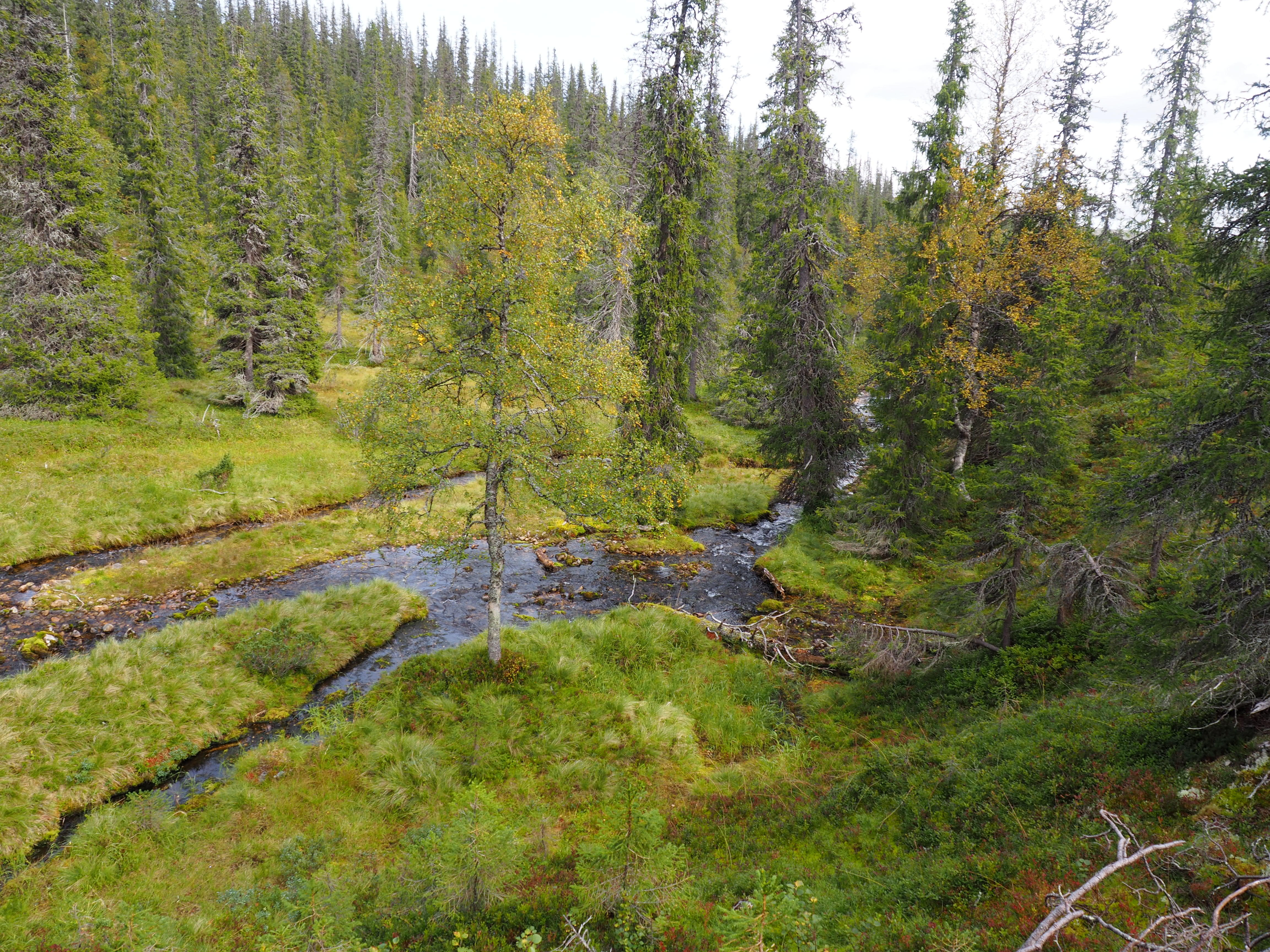 economic ecological optimization group spruce and river picture