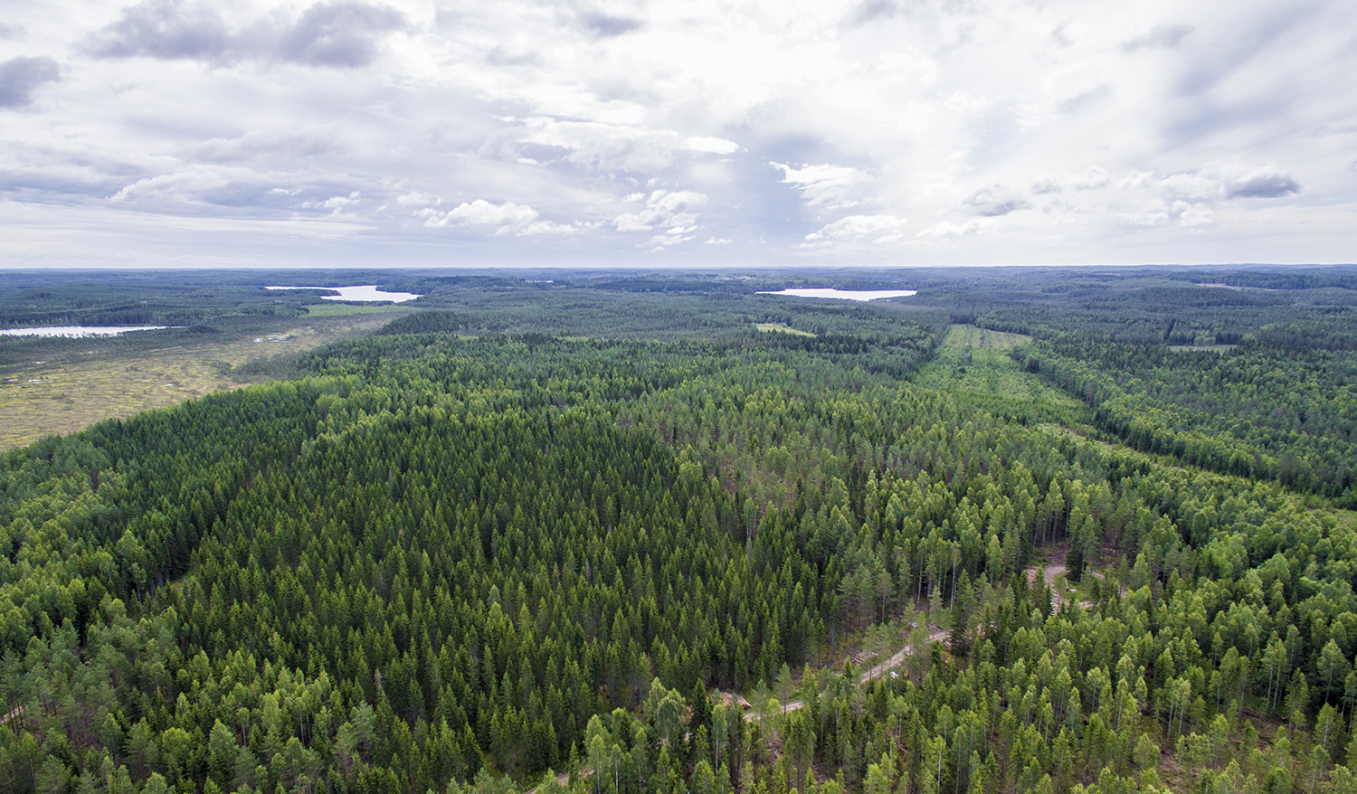 Boreal Forest Dynamics and Biodiversity Research Group