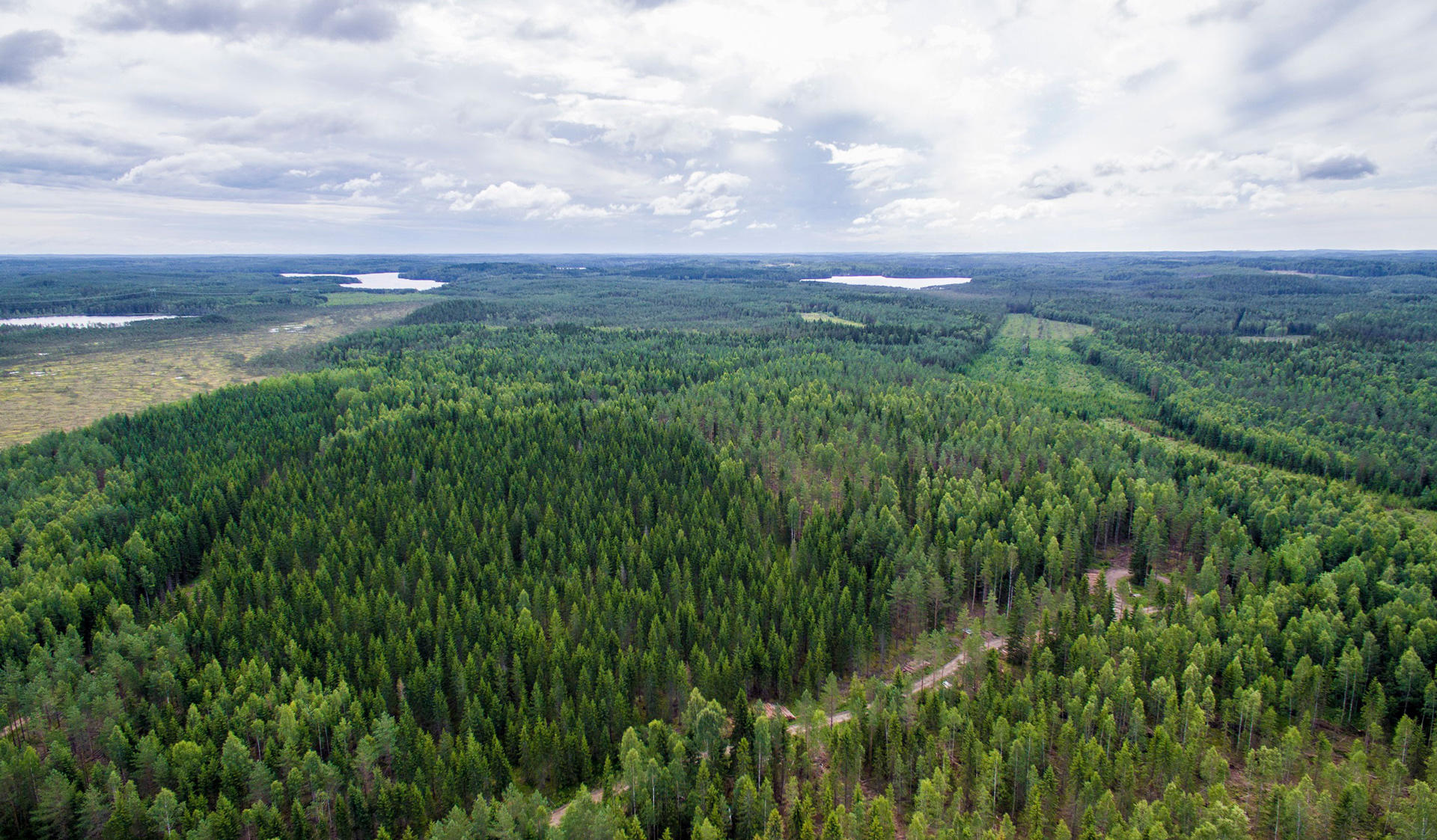 Forest Resources Management and Geoinformation