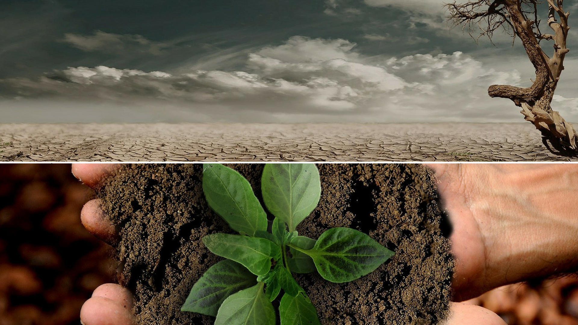 Core studies in Environmental Change and Global Sustainability.