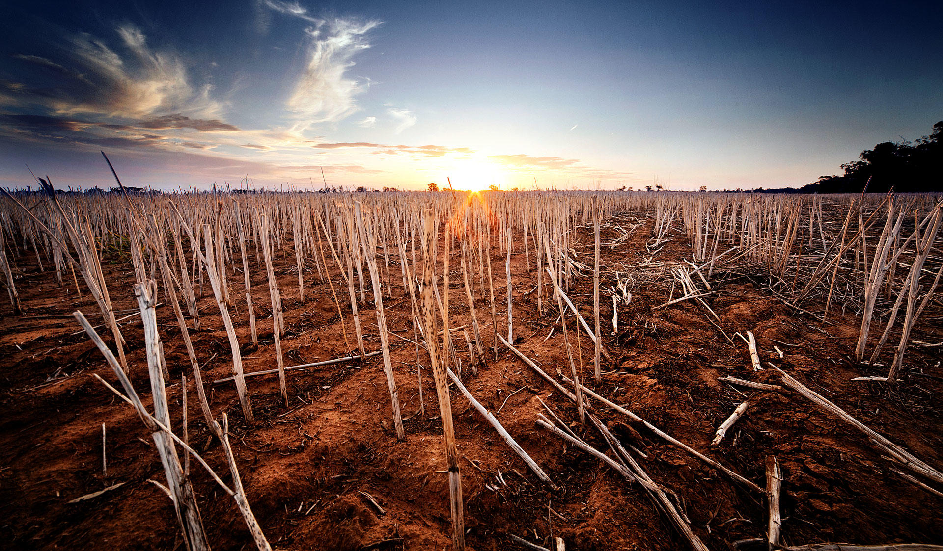 A field affected by severe drought. The image of the Master's Programme in Agricultural Sciences at the University of Helsinki.