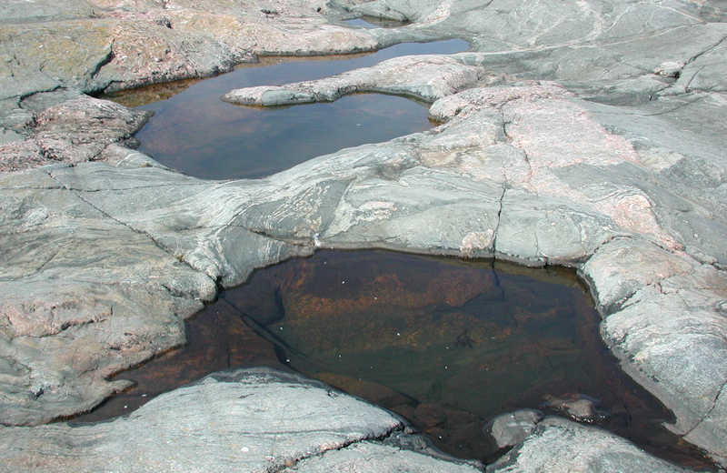 Tvärminne current research projects – rock pools