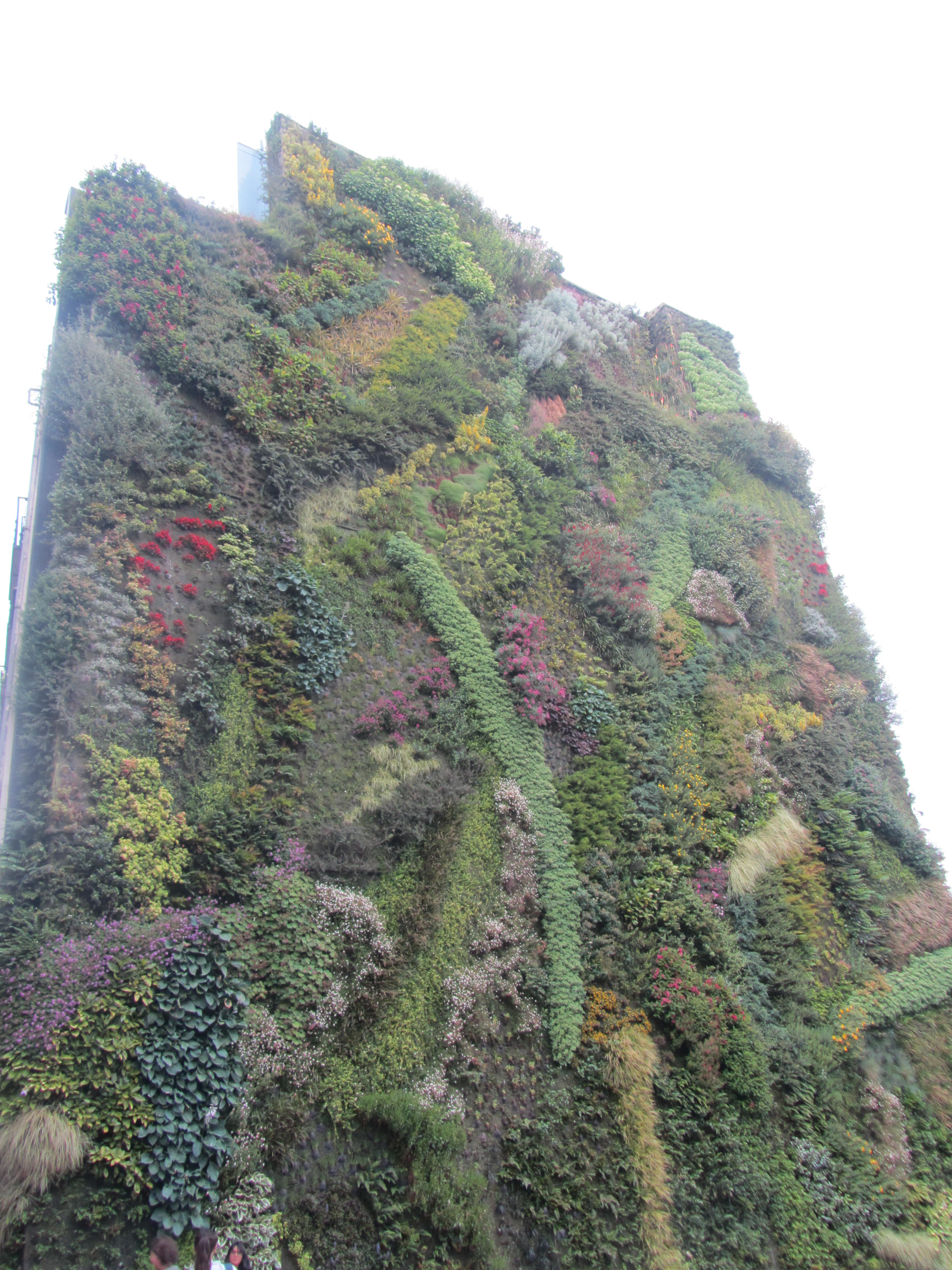 Green walls are one way to reduce urban heat and create more carbon sinks in the cities.
