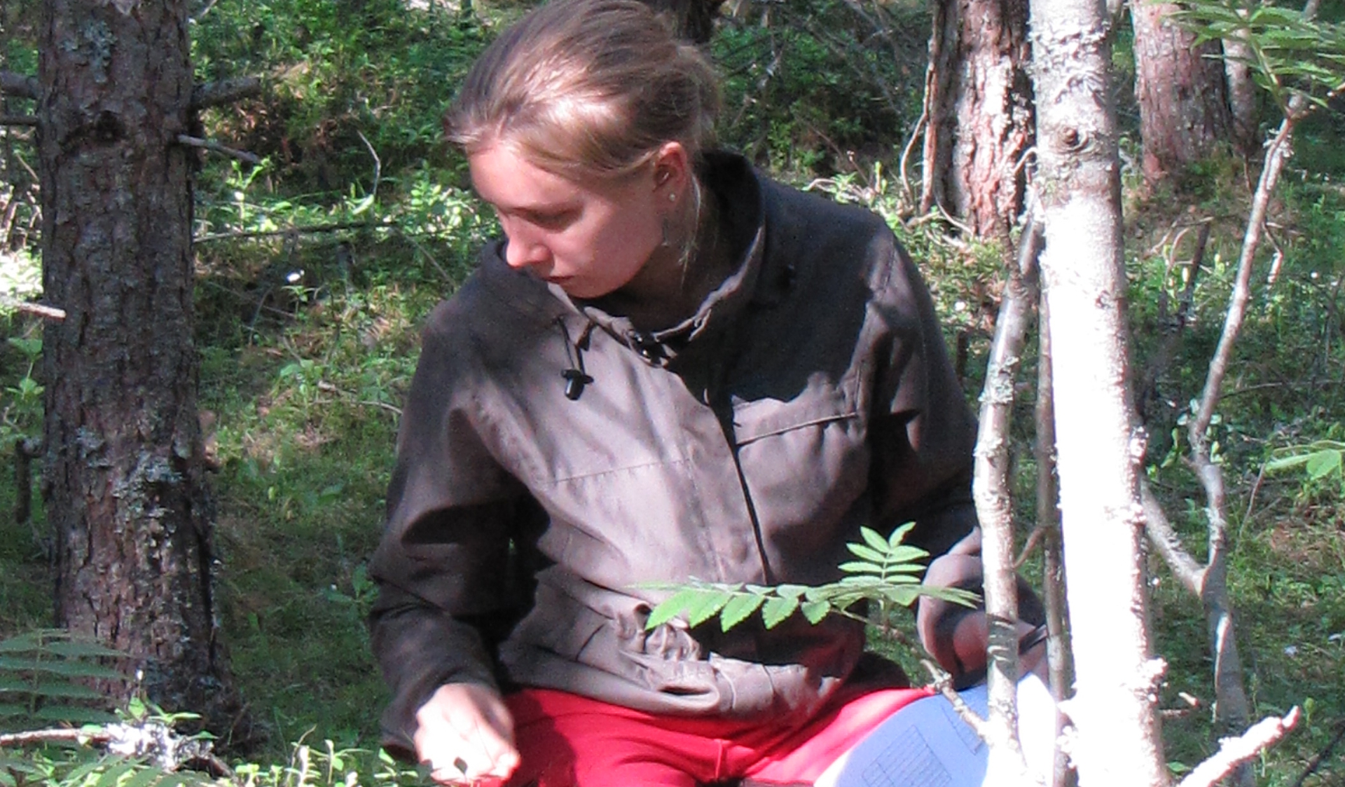 Hyytiälä course field work