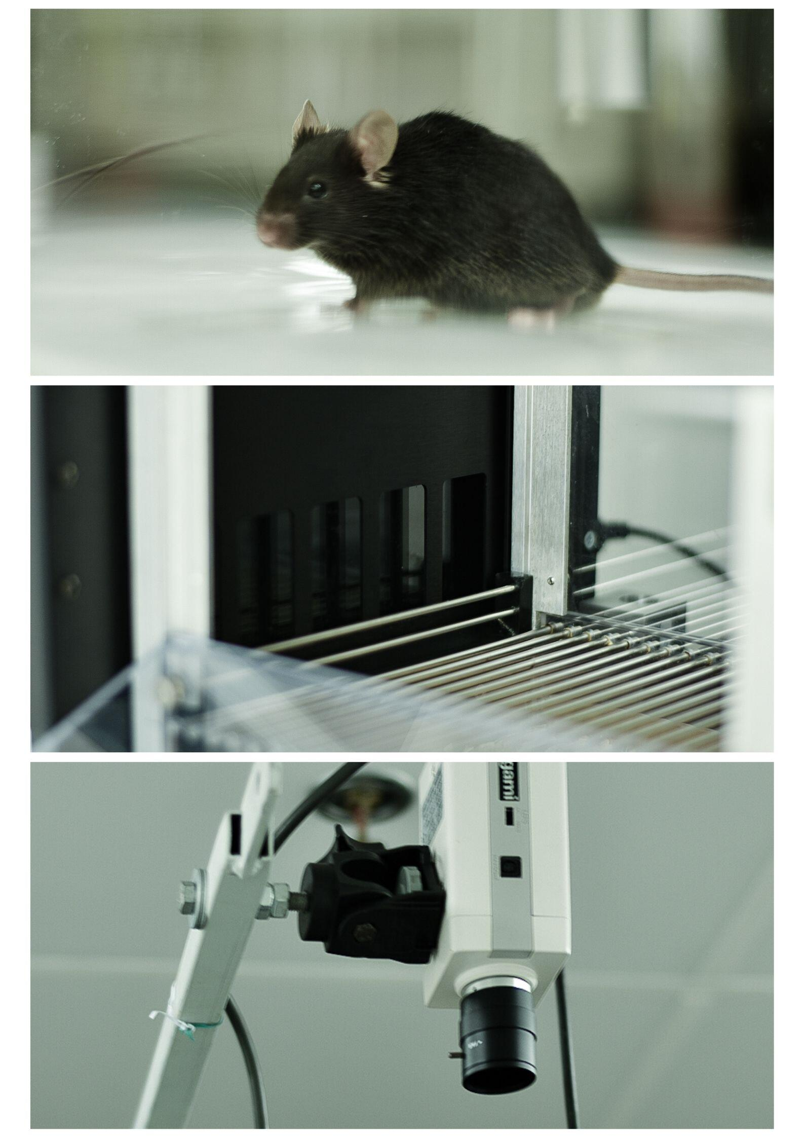 Pictures of the rodent phenotypic facility equipment