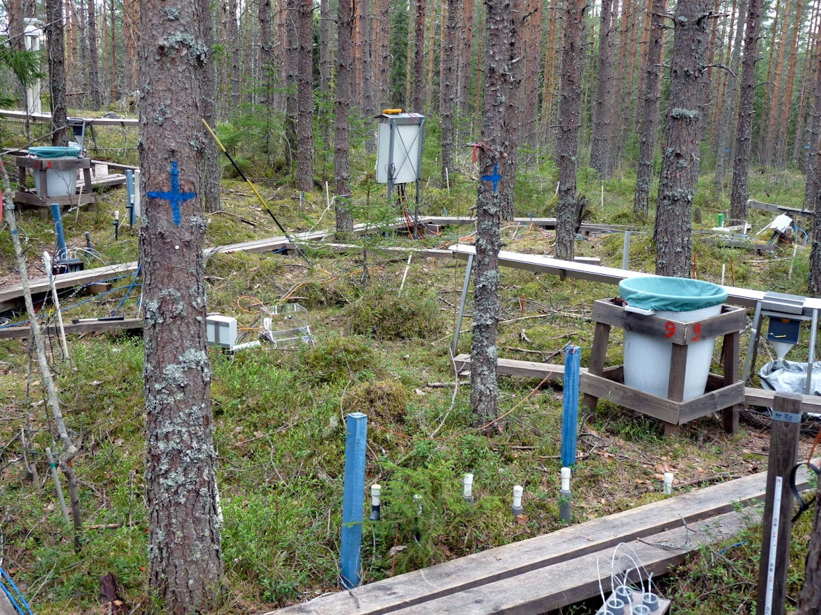 forest science courses
