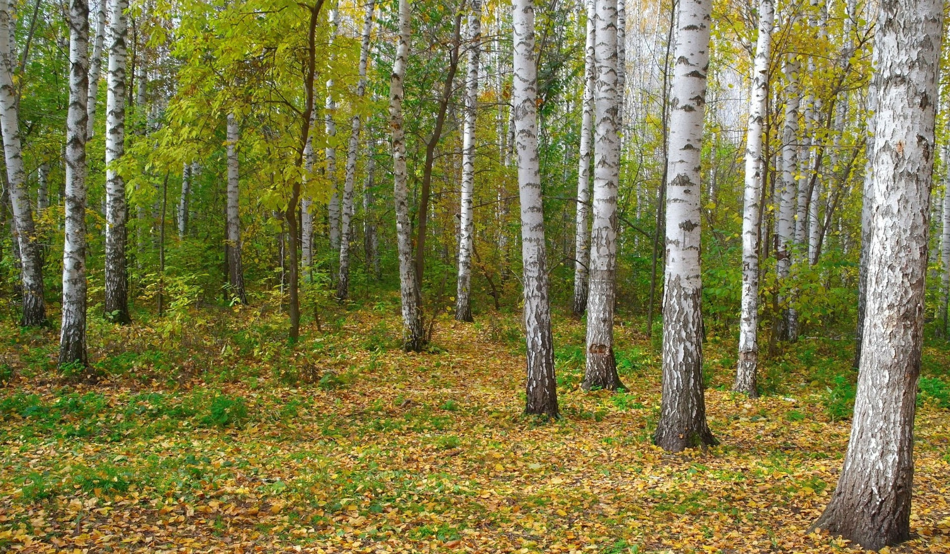 pic of forest in autumn