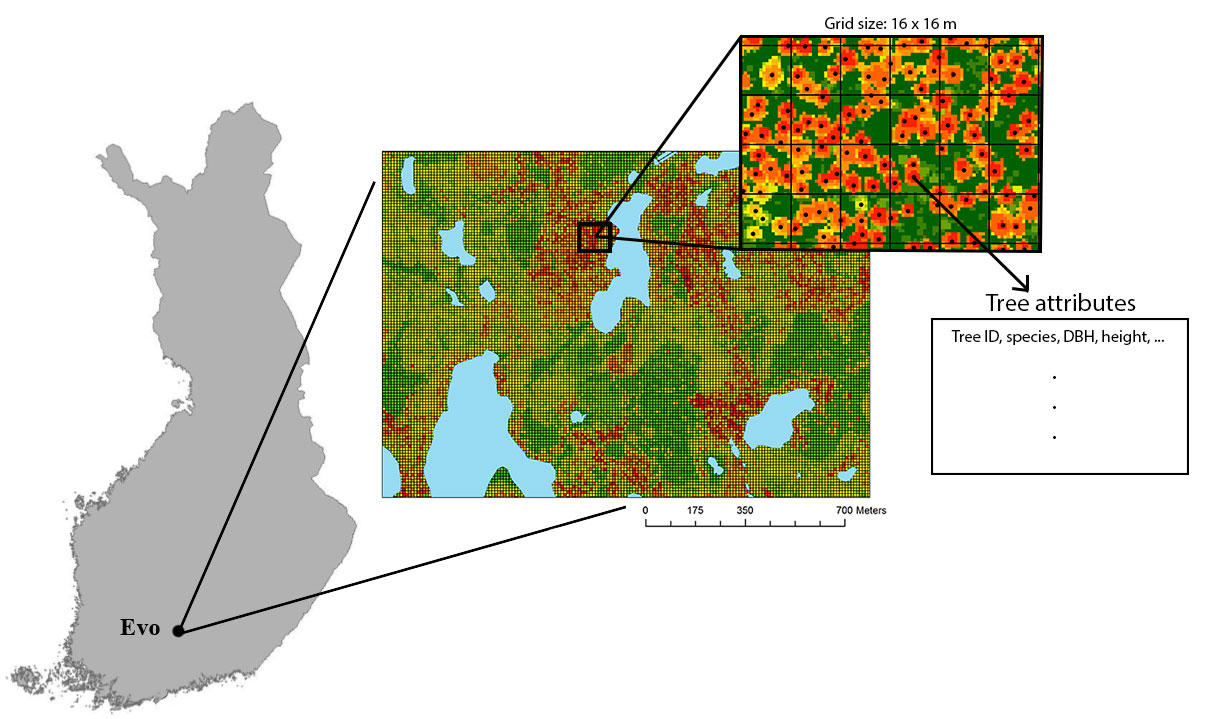 The Laboratory of Forest Resources Management and Geo-information, Tracks in research