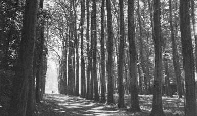 Road aligned by big trees with two people in the horizon. Image by Janne I. Hukkinen.